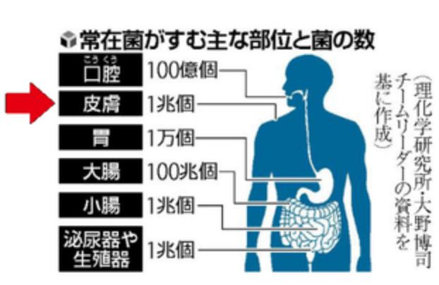 人体の肌には1兆個の常在菌